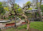 Городской сад Одесса
