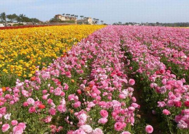 Долина роз, Одесская область