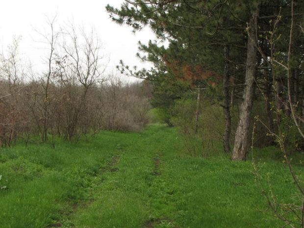 Дальницкий лес, Одесса