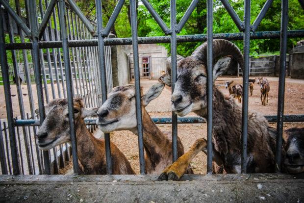 Зоопарк в Одессе