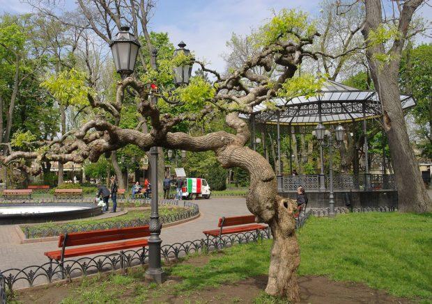 Городской сад на улице Дериьассовской